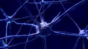 neuroplastyczość